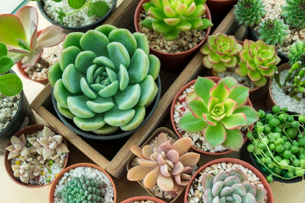 Top view of various types of succulent plant pots