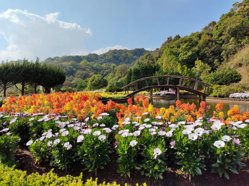 landscaped garden